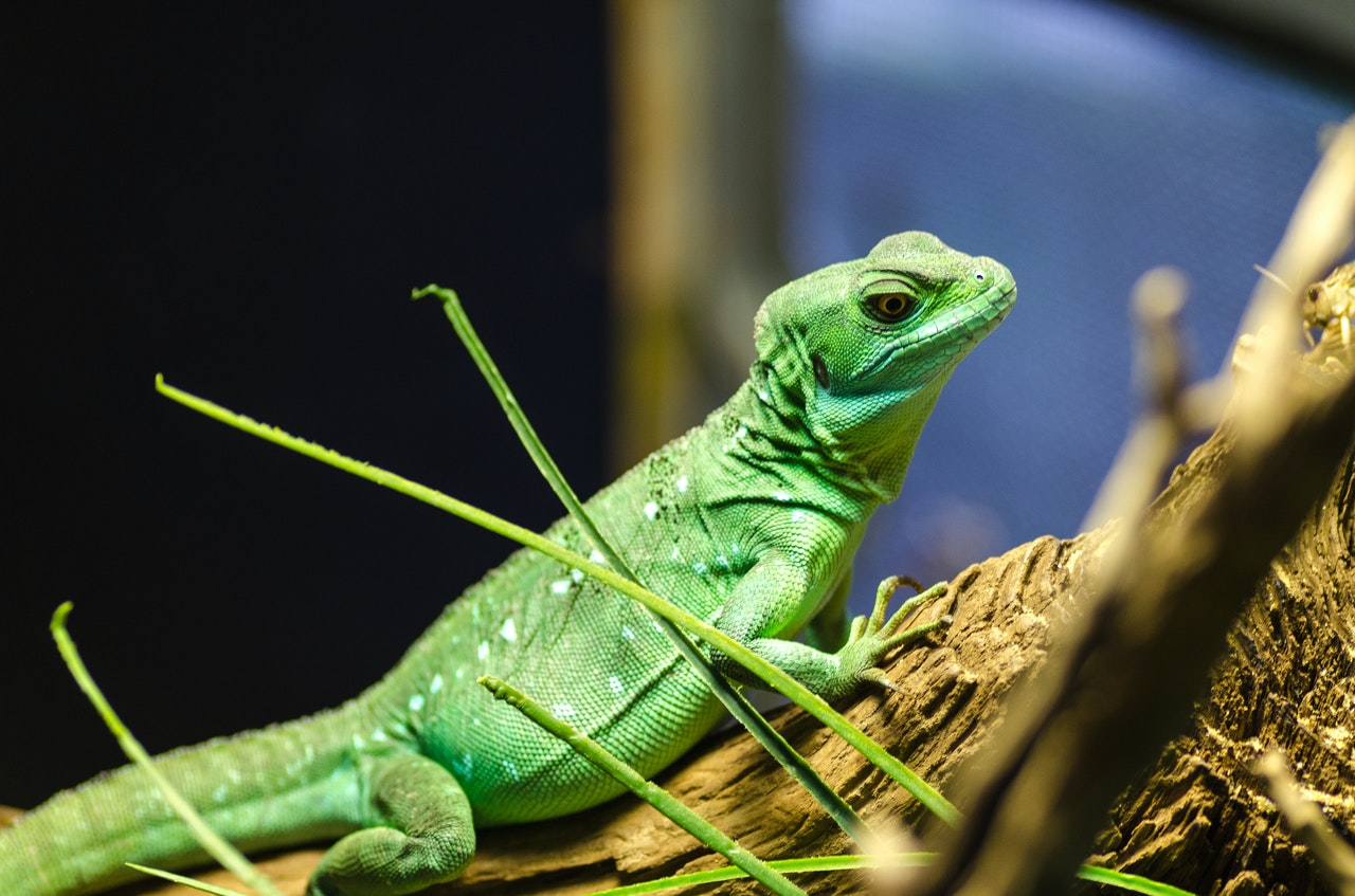 How to keep a gecko at home. All About Geckos: Gecko Facts. Nutrition and behavior in nature